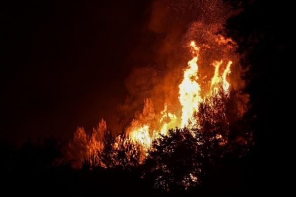 Φωτιά στην Φθιώτιδα: Υπό έλεγχο το πύρινο μέτωπο