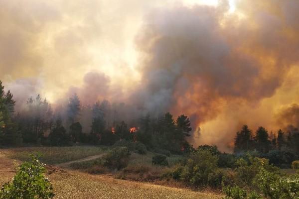 Φωτιά στην Ηλεία: Νέο μέτωπο σε εξέλιξη -  Εστίες σε Δούκα και Ξηρόκαμπο