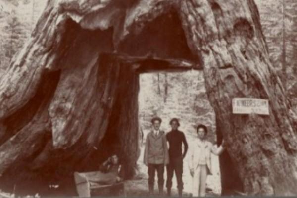 Έκαναν μια τρύπα σε ένα δέντρο ηλικίας χιλίων ετών. 130 Χρόνια Αργότερα όμως, ανακάλυψαν κάτι το σοκαριστικό!