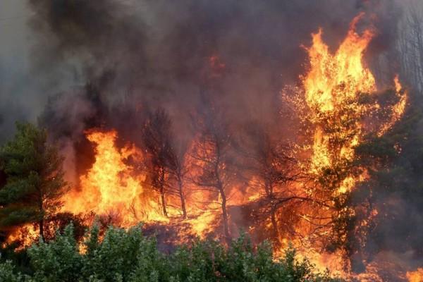 Φωτιά στην Αρχαία Ολυμπία: Με αναπνευστικά προβλήματα ένας πυροσβέστης, με εγκαύματα ένας πολίτης