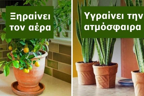 10 φυτά εσωτερικού χώρου που καθαρίζουν την ατμόσφαιρα και ρυθμίζουν την υγρασία του σπιτιού σας!