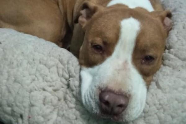 Γαλάτσι: Μπέρδεμα για τις συνθήκες θανάτου του σκύλου - Η προσπάθεια της Αστυνομίας να δικαιολογηθεί και η περίεργη κατάθεση της συντρόφου του ιδιοκτήτη