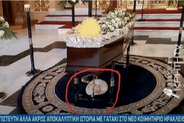 Απίστευτο! Γατάκι στην Κρήτη πηγαίνει σε κηδείες και παρηγορεί τους συγγενείς!
