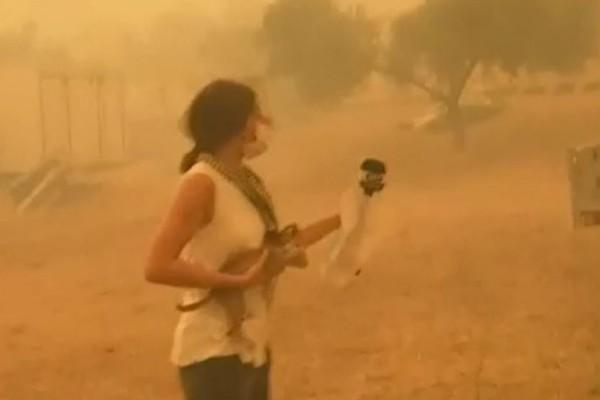 Φωτιά στην Εύβοια: Η συγκινητική στιγμή που δημοσιογράφος σώζει γατάκι από τις φλόγες
