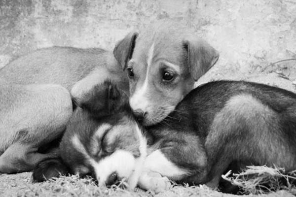 Έβαλαν μια κρυφή κάμερα σε έναν αδέσποτο σκύλο - Αυτό που κατέγραψαν, ραγίζει καρδιές… (Video)
