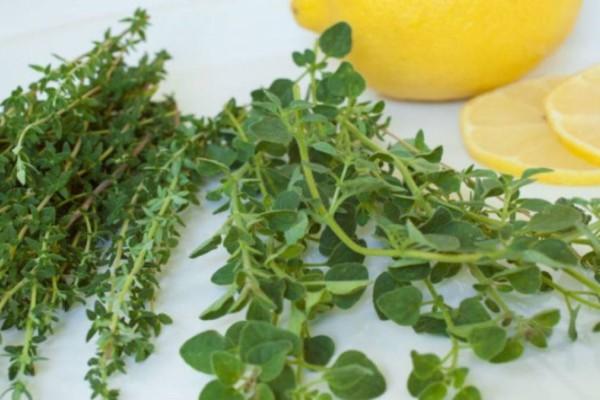Καρκίνος του παχέος εντέρου: Ποιο Ελληνικό βότανο μας προστατεύει!