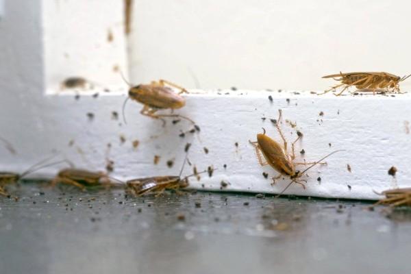 2+1 Φυσικοί τρόποι για να ξεφορτωθείτε τις κατσαρίδες για πάντα