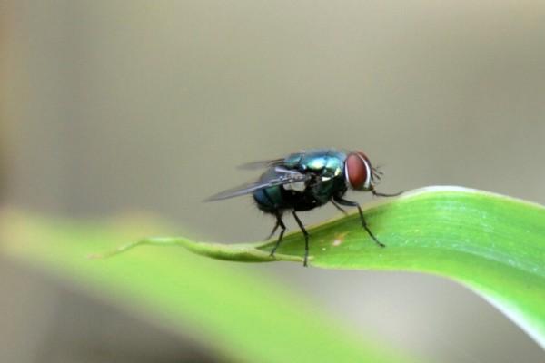 Απίστευτο περιστατικό: Την τσίμπησε μύγα και υπέστη αλλεργικό σοκ