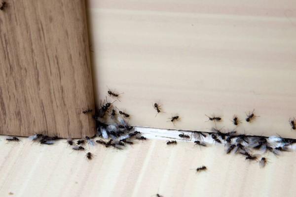 Μυγάκια και μυρμήγκια... τέλος: 6+1 φυσικοί τρόποι για να τα διώξετε και να ησυχάσετε