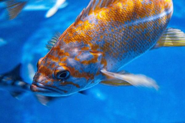 Καθηγητής πανεπιστημίου: «Τα ψάρια που ακούνε Κοράνι, μεγαλώνουν πιο γρήγορα»