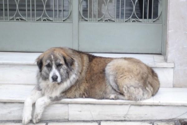 Κτηνωδία στη Θεσσαλονίκη: 25χρονος μαχαίρωσε και σκότωσε σκύλο