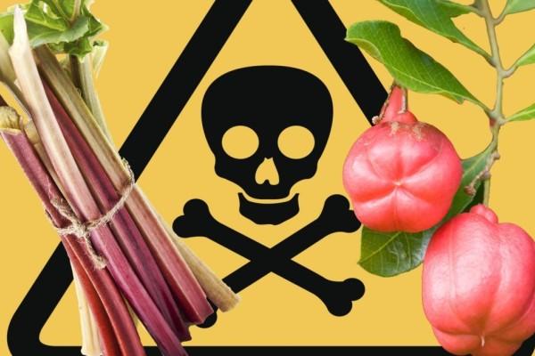 Έμφραγμα και εγκεφαλικό: Κίνδυνος από ουσία σε βασικές τροφές - Δείτε ποιες είναι αυτές