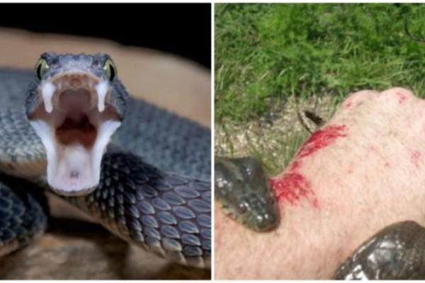 Σώζει ζωές! Αυτά πρέπει να κάνετε αν σας δαγκώσει φίδι!