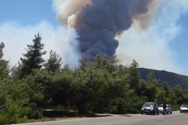 Φωτιά σε Κερατέα και Βίλια: Γύρω στις 50.000 στρέμματα οι καμένες εκτάσεις