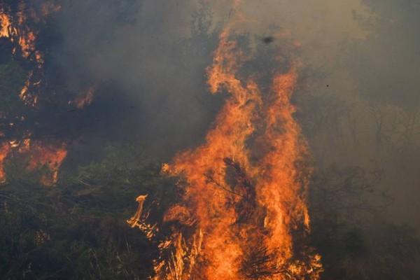Μεγάλη φωτιά τώρα στην Κερατέα: Σε κατοικημένη περιοχή ανάμεσα σε Κακιά Θάλασσα και Δασκαλειό!