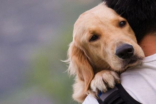 Νομοσχέδιο για τα ζώα συντροφιάς: Ποιες είναι οι υποχρεώσεις των ιδιοκτητών - Τι ψηφίστηκε