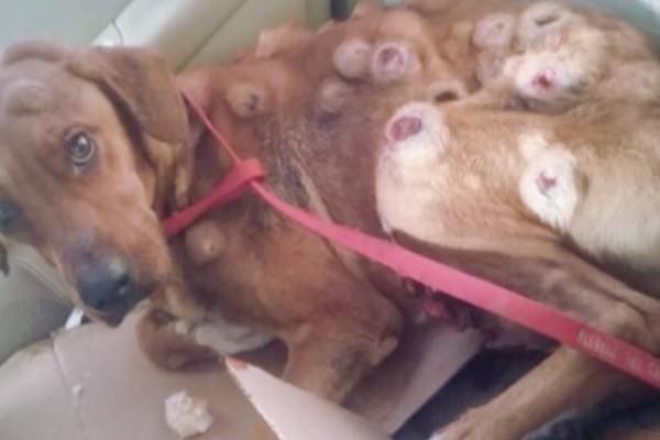 Όταν έφερε τον σκύλο σπίτι ήταν σε τραγική κατάσταση. Μόλις δείτε πως είναι σήμερα, δεν θα το πιστεύετε!