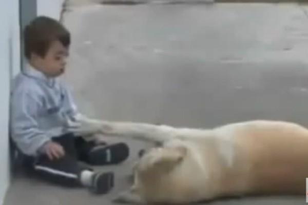 Σκύλος πλησιάζει παιδάκι με σύνδρομο Down και... (Video)