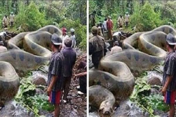 """Ήξεραν ότι τα ανακόντα είναι τα μεγαλύτερα φίδια του πλανήτη, αλλά μόλις είδαν αυτό το """"τέρας""""; Δεν πίστευαν στα μάτια τους!"""