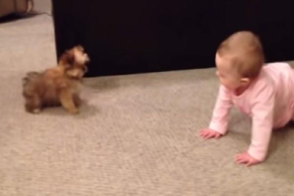 Πατέρας τραβάει με την κάμερα το μωράκι του ενώ συζητάει με τον σκύλο - Θα «λιώσετε» (vid)