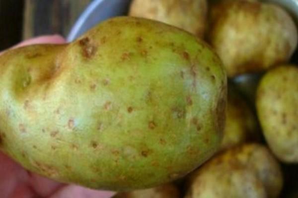 Πατάτες «δολοφόνοι» - Έχουν δηλητήριο και καταναλώνονται από όλους