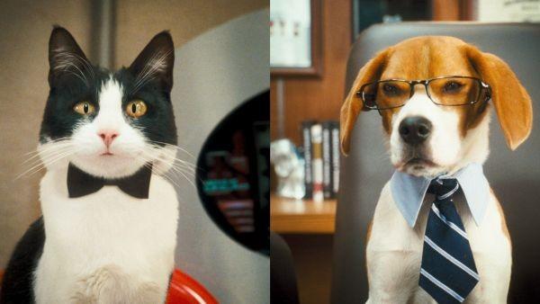 Σαν το σκύλο με τη γάτα Νο2: Η εκδίκηση της Κίτι Γκάλορ