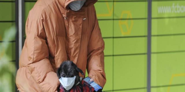 Είδηση σοκ: Θετικός και σκύλος στον κορωναϊό!