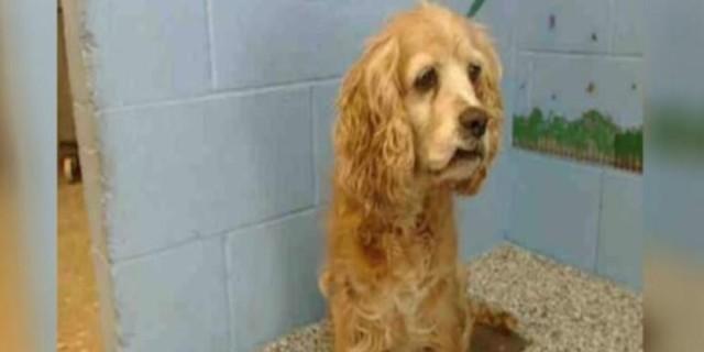Θα δακρύσετε: 15χρονη σκυλίτσα κλαίει, καθώς ο ιδιοκτήτης της την παρατάει και απομακρύνεται με το νέο του κουτάβι!