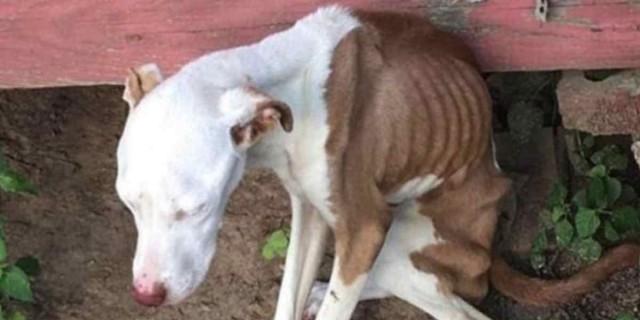 Θλιβερή ιστορία: Σκελετωμένος και εγκαταλελειμμένος σκύλος εδώ και μήνες, ζει από θαύμα!