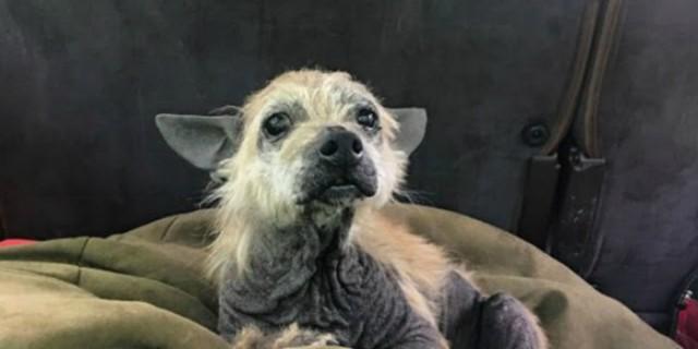 Ηλικιωμένος σκύλος σταματάει ένα αυτοκίνητο και ζητάει βοήθεια - Η συνέχεια ραγίζει καρδιές