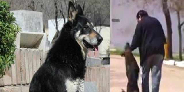 Αυτός ο σκύλος καθόταν επί 11 χρόνια σε αυτό τον τάφο και πέθανε εκεί - Μόλις δείτε ποιανού ήταν θα δακρύσετε