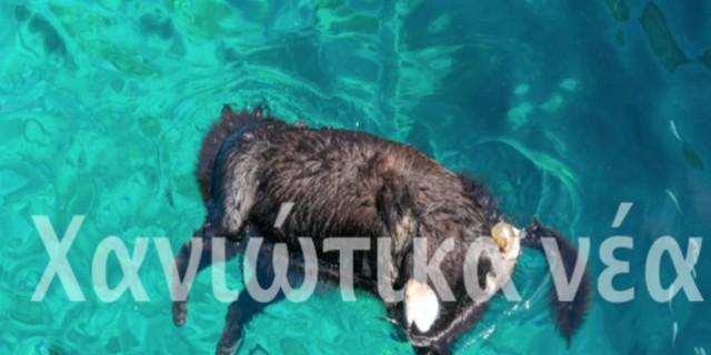 Κτηνωδία στην Κρήτη: Κτήνη βασάνισαν και έπνιξαν σκύλο