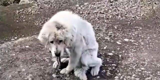 Το ηλικιωμένο αυτό σκυλί εγκαταλείπεται από την οικογένεια του – Στο πρόσωπο του αντανακλάται η θλίψη που του προκάλεσαν