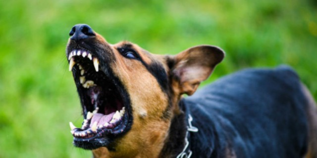 9χρονος κατασπαράχθηκε από σκύλο (photo)