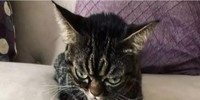 Η γάτα αυτή έχει μόνιμα το ίδιο κατσουφιασμένο ύφος - Μόλις την δείτε θα