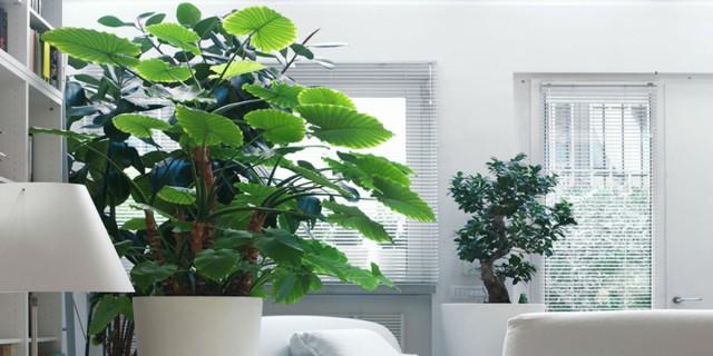 4+1 φυτά που θα κάνουν το σπίτι σου να μοσχομυρίζει