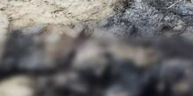 Κτηνωδία στα Χανιά: Έκαψαν σκύλο και τον άφησαν σε κοινή θέα (photos-Σκληρές εικόνες)
