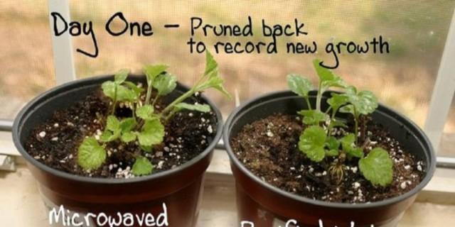 Φούρνος μικροκυμάτων: Δείτε τι κάνει στα φυτά και θα τον πετάξετε