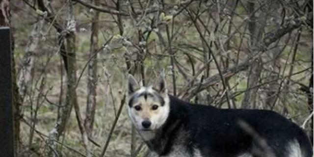 Σκύλος ζει 16 ολόκληρα χρόνια σε νεκροταφείο - Ο λόγος ραγίζει και την πιο