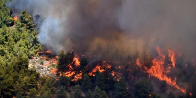 Φωτιά σε δασική έκταση στην Φωκίδα