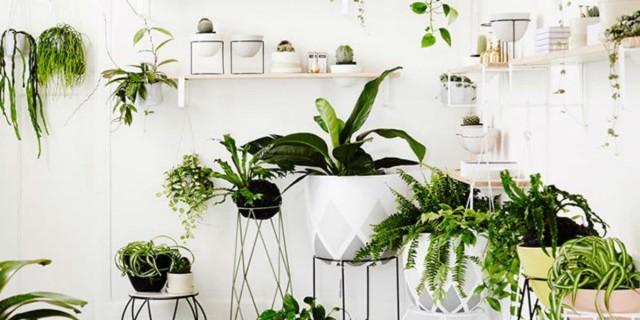 Το κόλπο με το φίλτρο του καφέ που θα σώσει τα φυτά σας