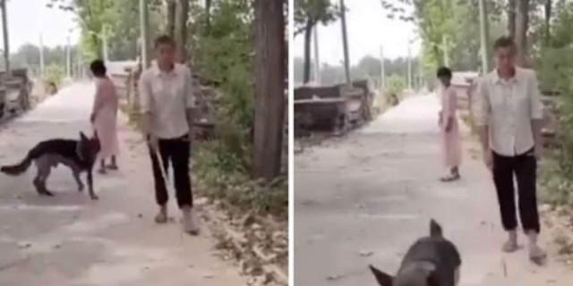 Σκύλος βλέπει έναν τυφλό άνδρα και... - Αυτό που κάνει θα σας ανατριχιάσει