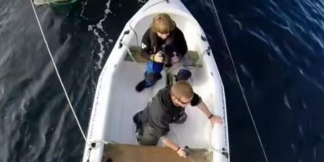 Συγκλονιστικό: Η στιγμή που καρχαρίας επιτίθεται σε τηλεοπτικό συνεργείο