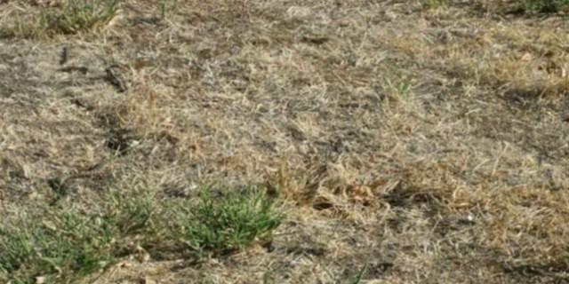 Μπορείτε να εντοπίσετε το καμουφλαρισμένο φίδι σε λιγότερο από 12 δευτερόλεπτα; (photo)