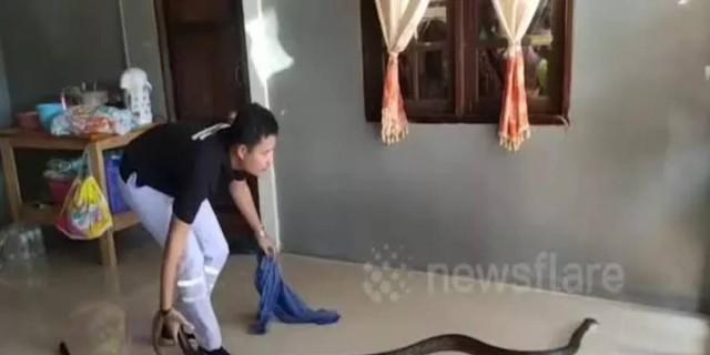 Ένα γιγαντιαίο φίδι εισέβαλε στο σπίτι της - Εκείνη αντέδρασε με τον πιο αδιανόητο τρόπο