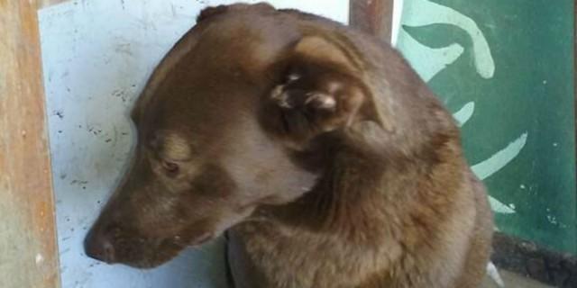 Σκυλίτσα με κατάθλιψη κάθεται μόνη σε καταφύγιο για 2 χρόνια - Ξαφνικά μυρίζει κάτι... (Video)