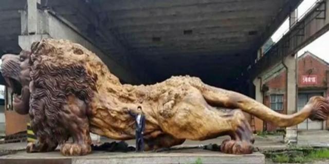 Το γιγαντιαίο λιοντάρι που χάραξαν από ένα δέντρο 20 άνθρωποι σε 3 χρόνια γίνεται το μεγαλύτερο γλυπτό κοκκινόξυλο στον κόσμο