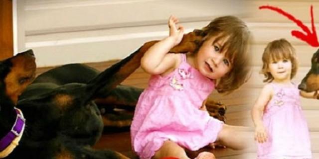 Σκύλος δάγκωσε την 17 μηνών κόρη της και την πέταξε μακριά - Μόλις κατάλαβε γιατί το είχε κάνει «πάγωσε»