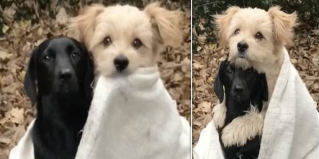 Σκυλάκι κάνει μία απίστευτη κίνηση στο φίλο του που ούτε ο ιδιοκτήτης δεν το πίστευε (video)