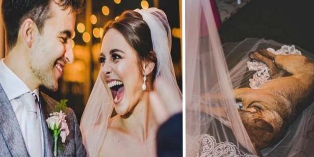 Αδέσποτος σκύλος εισέβαλε απρόσκλητος σε γάμο και...